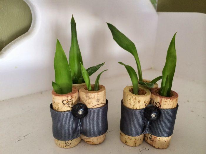 Diy cork with plants
